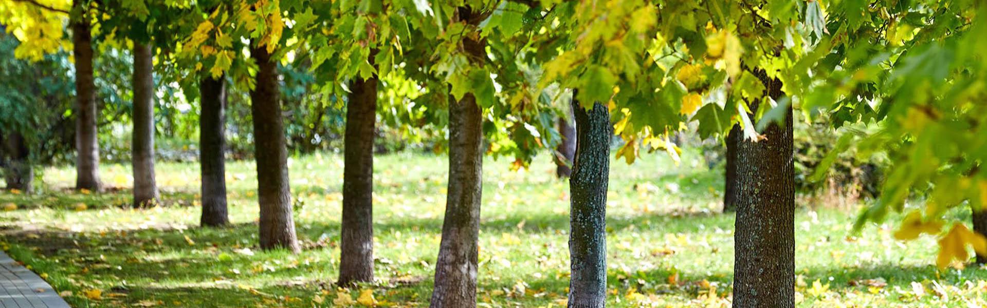деревья в зеленограде